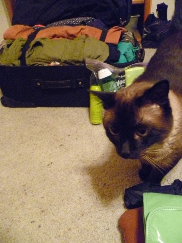 Yeats (or is it Pippin?) helping me pack for Norwich.