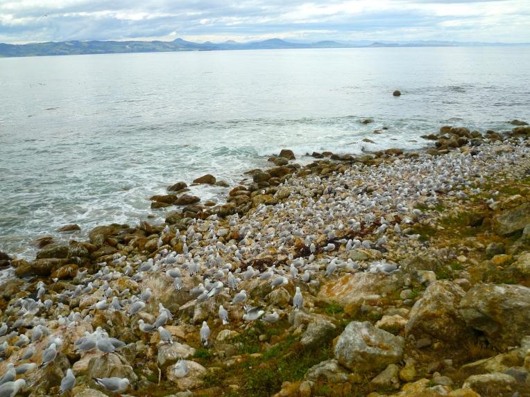 Seabirds at Aromoana.