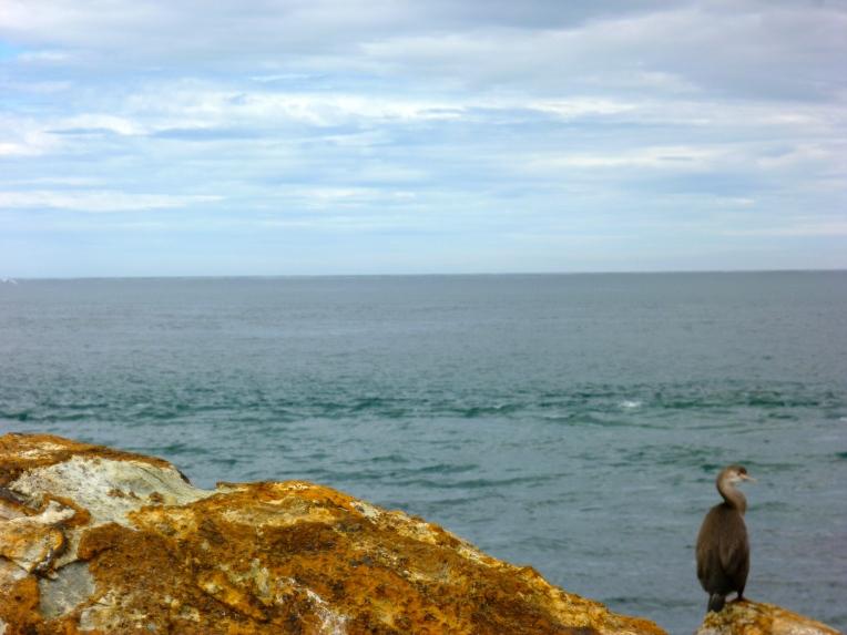 Cormorant at Aromoana.