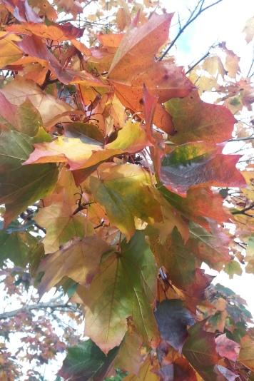 autumn colours!